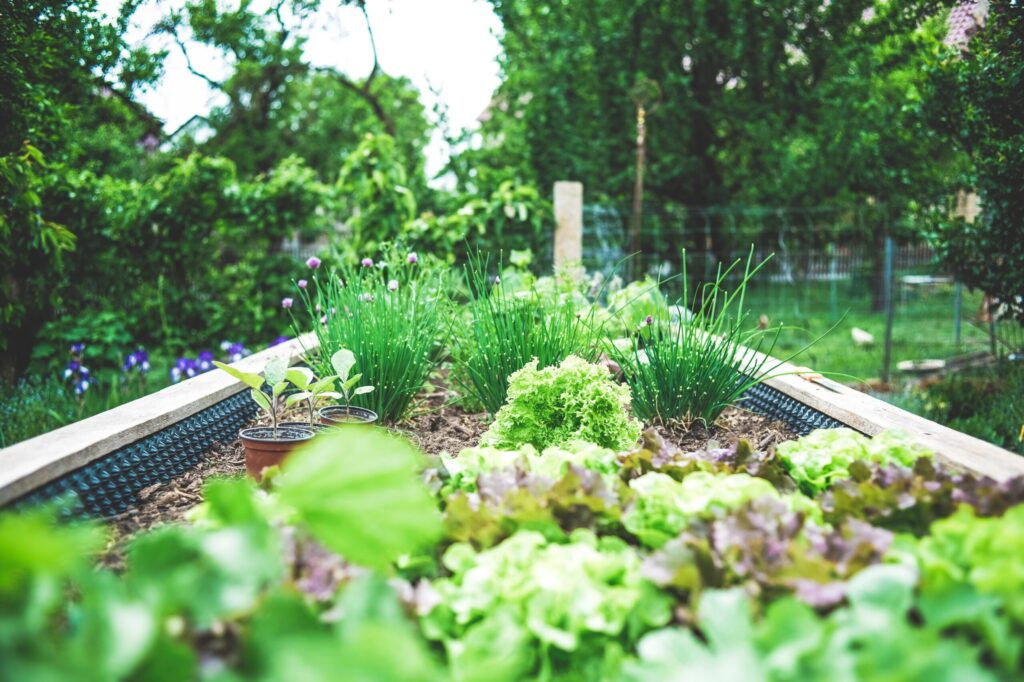 Start your own backyard vegetable garden